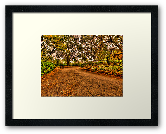 up the garden path by Andrew (ark photograhy art)