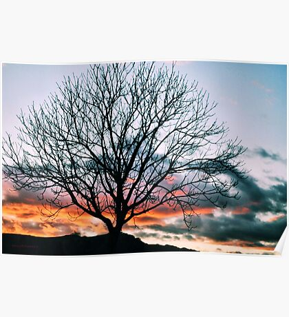 Colorful Sunset Tree Poster