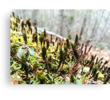 Mountain Moss Canvas Print