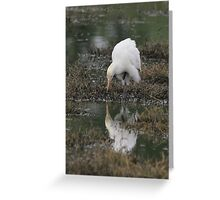 Cattle Egret with a tad touch of breeding plumage Greeting Card