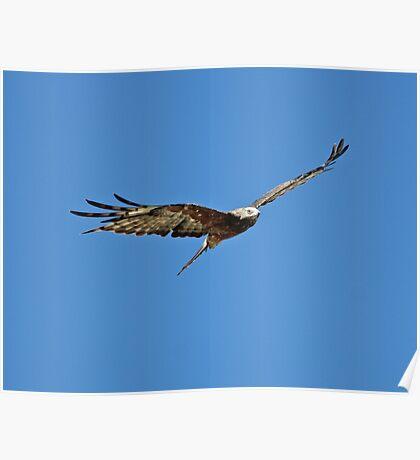 Hunting kite Poster