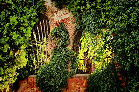 Garden Wall by Barbara  Brown