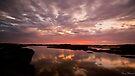 Dongara-Denison Wetlands  by Pene Stevens