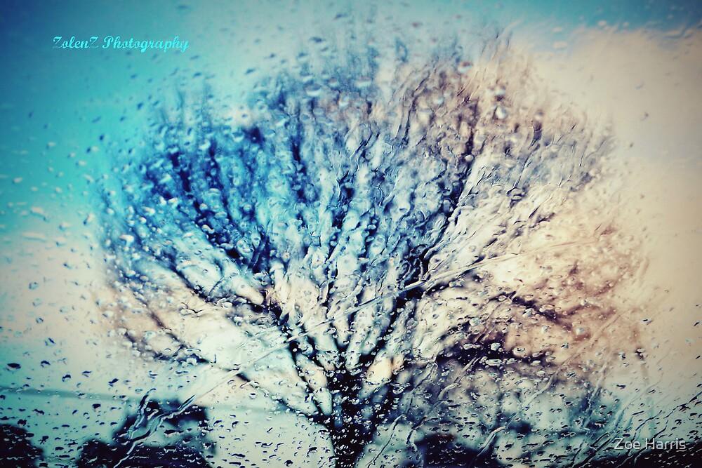 Window of trees by Zoe Harris