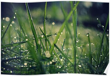 Dew grass by Zoe Harris