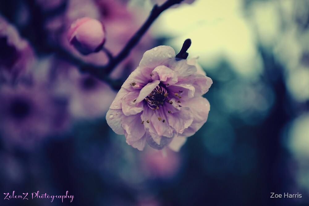 Lavender blossom by Zoe Harris