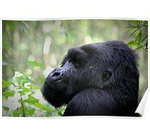 The Mountain Gorilla Poster