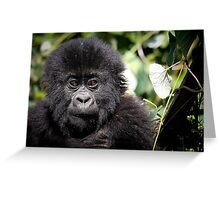 Baby mountain gorilla Greeting Card