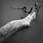 Old tree in lake by tpfeller