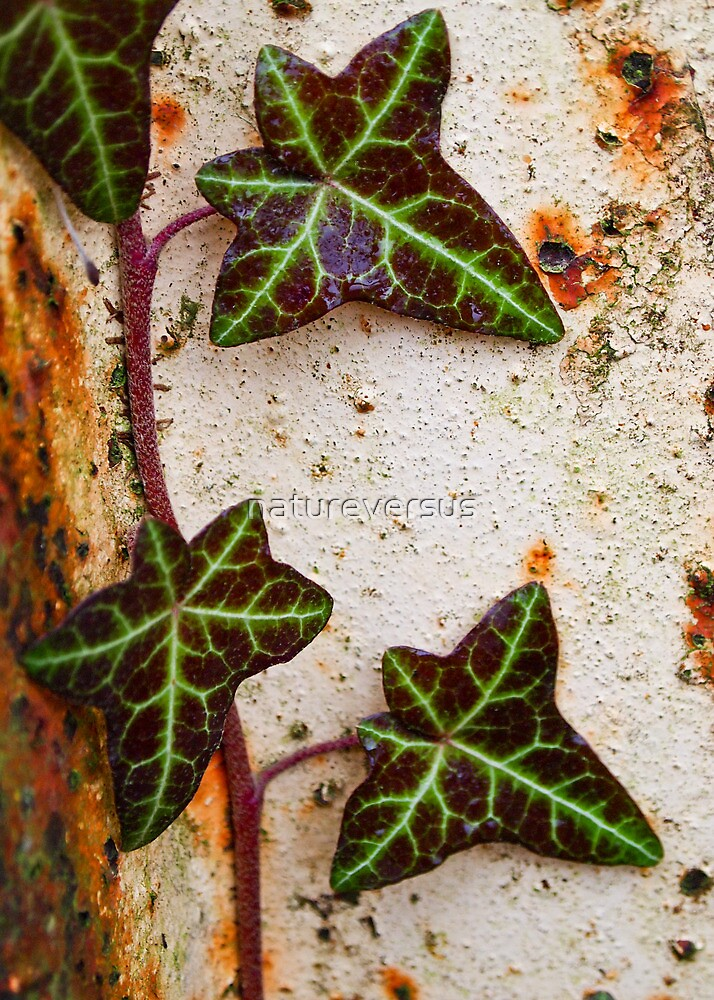Planet Ivy by Deb Maidment