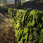 Moss of Ages by Francis Drake