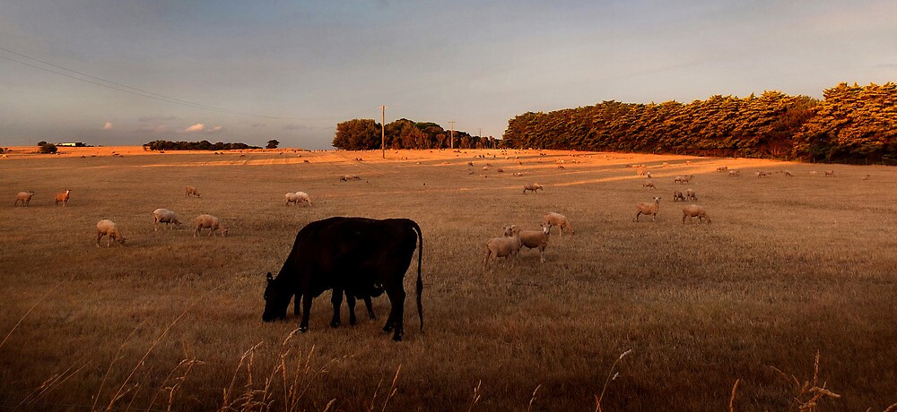 Close to Cows by Bruce  Watson