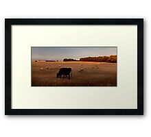 Close to Cows Framed Print