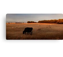 Close to Cows Canvas Print
