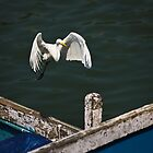 Egret Comes in to Land by AjayP