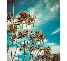 Hawaiian Palm Trees In The Wind Photographic Print