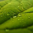 Avocado Droplet by seanusmaximus
