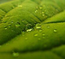 Avocado Droplet by seanusmaximus