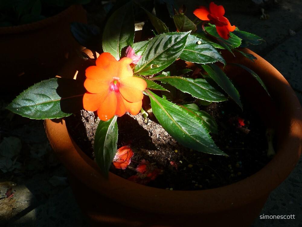 Sunpatience by simonescott
