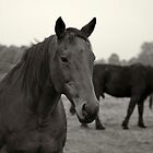 Equine portrait by seanusmaximus
