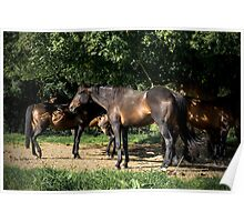 Tanned Horses Poster