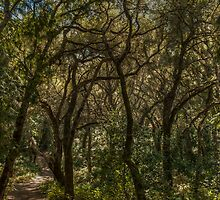 Branching Out by GeorgeBuxbaum