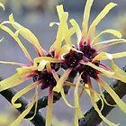 Trees, Plants & Flowers 2015 Calendar by Chris Monks