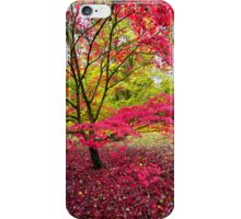 Japanese maple, Westonbirt Arboretum, Gloucestershire, UK iPhone Case/Skin