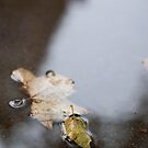 Leaves by Arissa