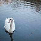 Swan by Arissa