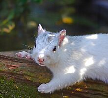 White Squirrel Hanging Out by Photography by TJ Baccari