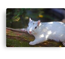 White Squirrel Hanging Out Canvas Print