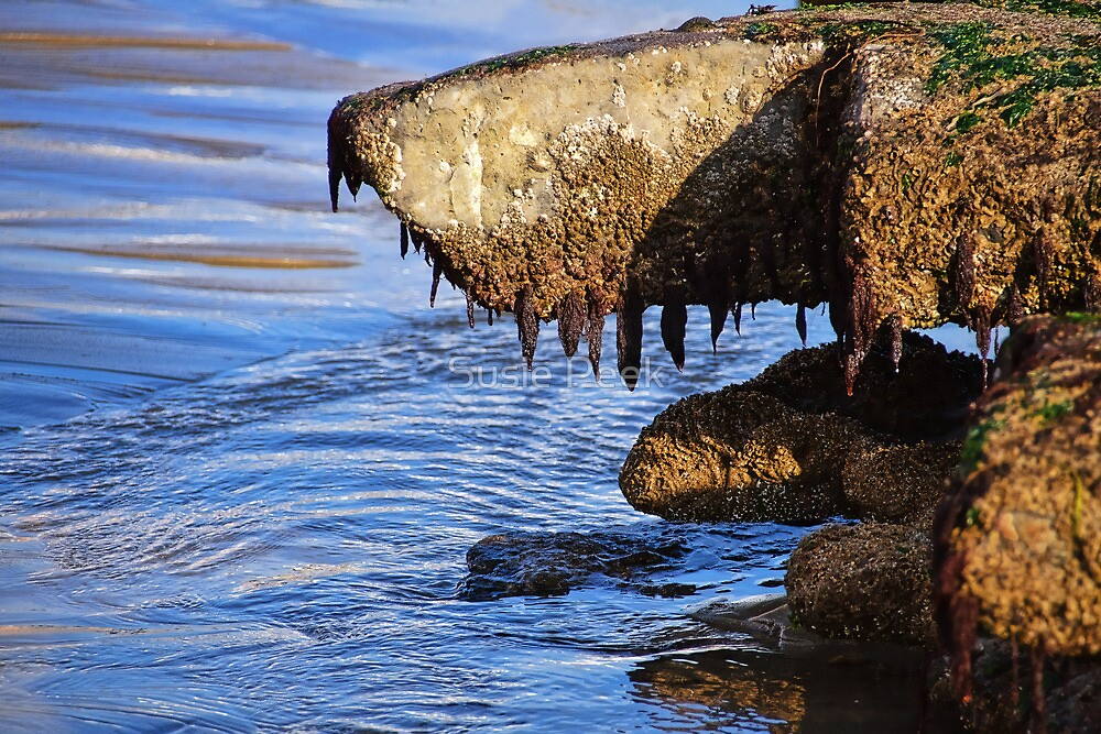 Monster From The Deep? ... Or Just Another Shaggy Dog Story :) by Susie Peek