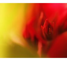 green & red Photographic Print