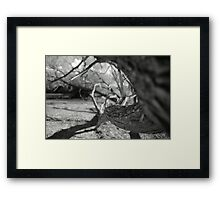 Twisting Trunk Framed Print