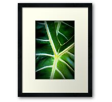 Leaves in Lomo Framed Print