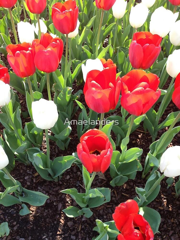 Flowers by Amaelanders