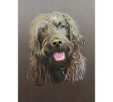 Muttley the Labradoodle Photographic Print