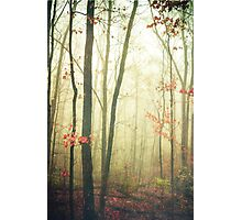 The Woods Are Lovely Dark and Deep Photographic Print