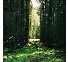 GreenForest_iphonecase by alla521