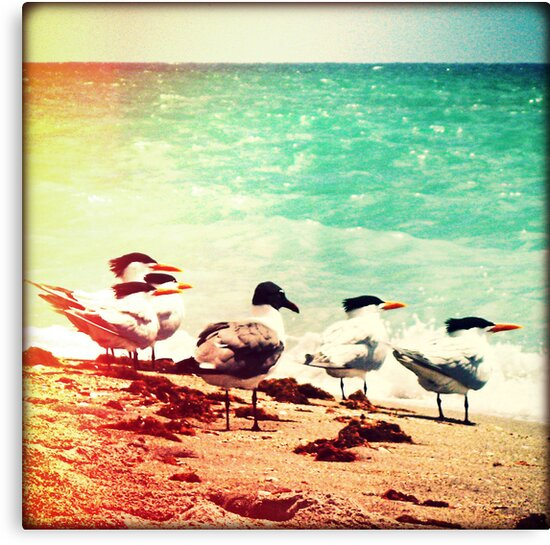 Flock of Terns by Chris Andruskiewicz