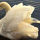 Swan In Circles by Stan Owen