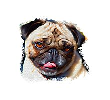 Cute little Pug Photographic Print