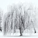 Winter Willow by DawsonImages