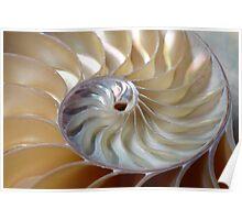 Nautilus spiral Poster