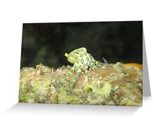 Greater Blue-ringed octopus Greeting Card