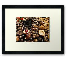Nutmegs laid out in landscape Framed Print