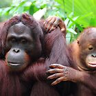 Orangutan mother and child by eugenesim