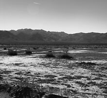 Joshua Tree VII by davidalf