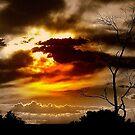 SKY by photoj